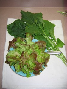 Selection of leaf lettuce and Broccoli Raab