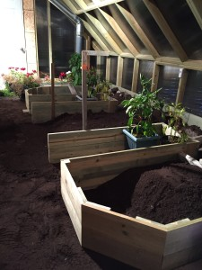 Raised beds in process. Summer peppers already moved in for protection