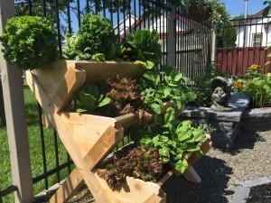 A square-foot salad garden in a tiered garden planter from Cedarcraft.com